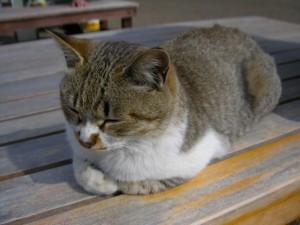 ブログイメージ猫